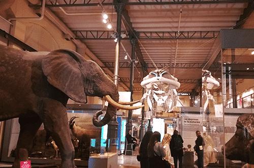Museos para visitar en Madrid para niños