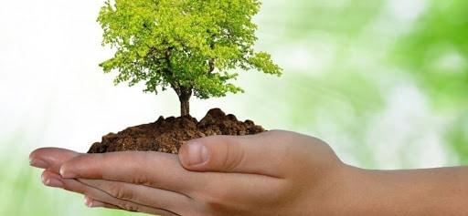importancia medio ambiente niños